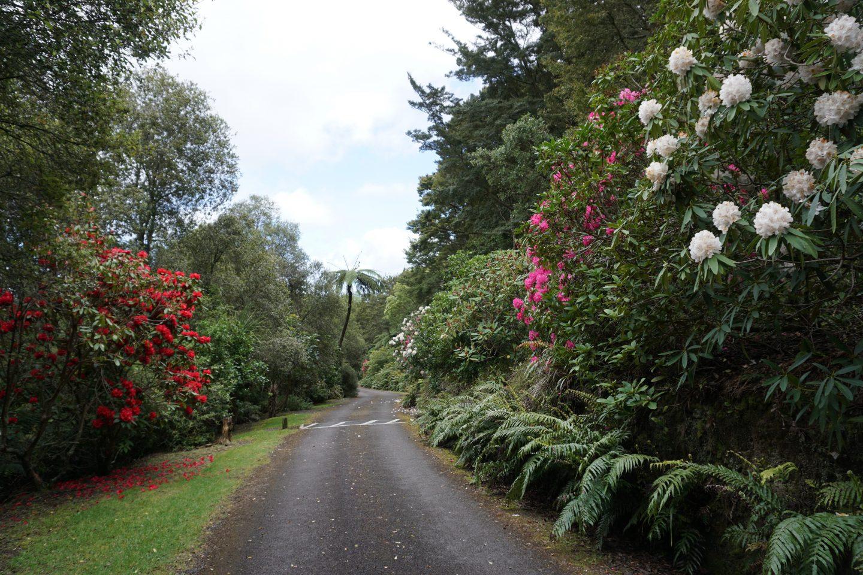 Jardin botanique de Taupo